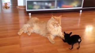 おもしろい犬と猫の喧嘩を動画を一つにまとめてみました♪これで笑ってく...