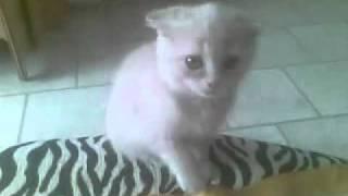 Котенок делает медовый массаж хозяйке