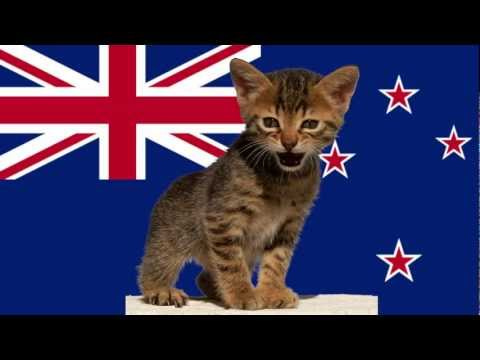 New Zealand Call to Eliminate Cats To Save Birds