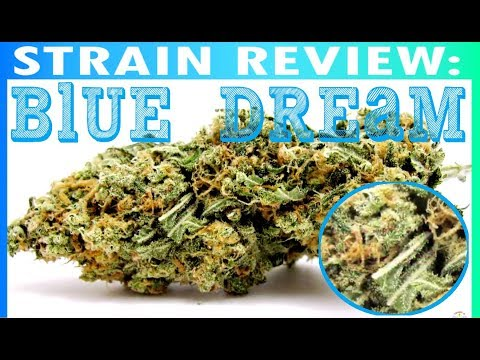 Strain Review BLUE DREAM