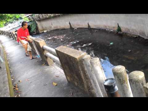 Senapang Ikan Betong Thailand