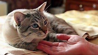Уход За Кошкой