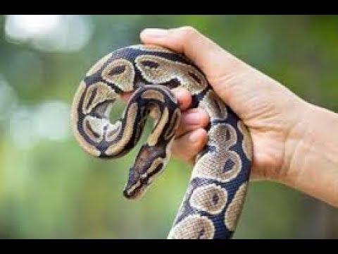 Yılanı Sıkıştığı Yerden Kurtardık