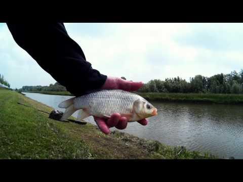 Vliegvissen op Karper en Giebel  - Fly fishing for Carp #13