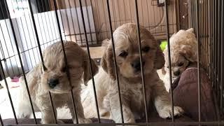 みんな一緒 全国優良ブリーダーの子犬紹介サイト『みんなのブリーダー』...