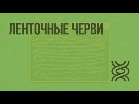 Ленточные черви. Видеоурок по биологии 7 класс