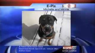 Minnie The Rottweiler Makes The Local News!