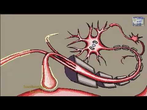PROPAGATION OF A NERVE IMPULSE,ANIMATION WELL EXPLAINED