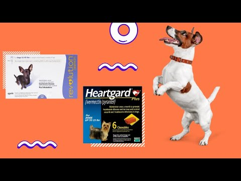 Heartgard Plus Vs Revolution – Which is the Best?