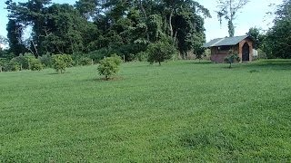 Osa Peninsula farm for sale with 2 houses, Under 200K