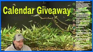 Aquarium Hangout - Solid Gold Calendar Giveaway Live Drawing - Livestream For Fish Enthusiast