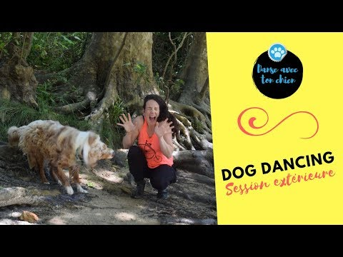 Dog dancing : 1ère session en extérieur dans un cadre paradisiaque