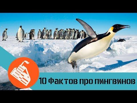 10 ФАКТОВ ПРО ПИНГВИНОВ | Почему пингвины не летают?