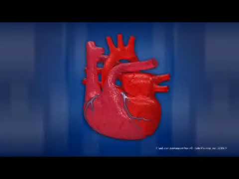 Как работает сердце человека ?