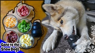 DIY Breakfast for Dogs in a Kong | DIY Dog Treats Recipe 105