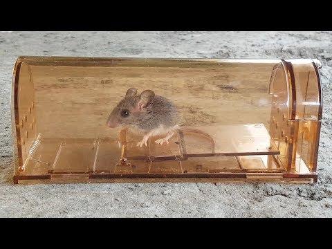 Vensmile Humane Smart Mouse Trap Review