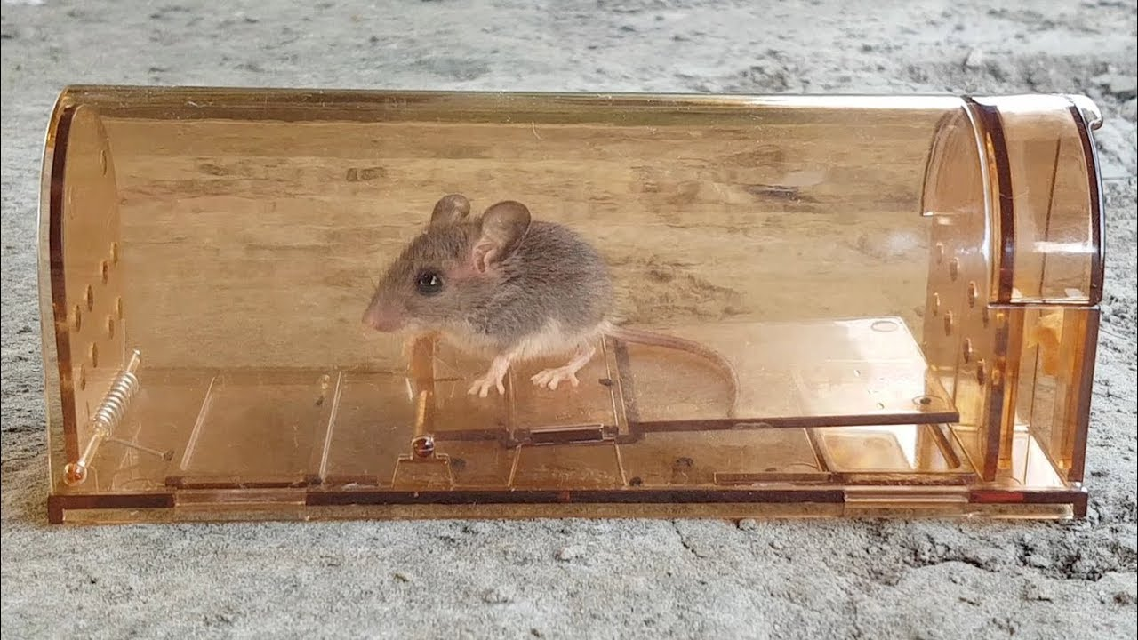 883978da43a Vensmile Humane Smart Mouse Trap Review - YouTube