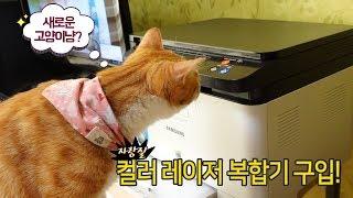 컬러 레이저 프린터를 새로 구입했어요! 고양이들에게 자랑해야죠!