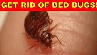 My Single Best Method For Bed Bug Bites Treatment - how to get rid of bed bug bites home remedies