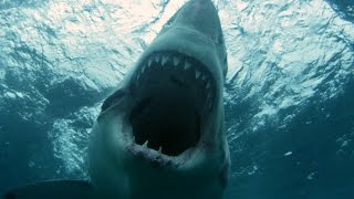 Experts Set Out To Capture The Largest Great White | SHARK WEEK