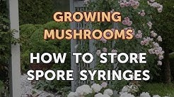How to Store Spore Syringes