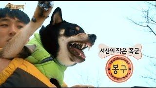 EBS 스페셜 프로젝트 - 세상에 나쁜 개는 없다 1부-말썽꾸러기 먹보 보리 / 서산의 작은 폭군 봉구_#002