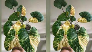 Como Fazer Plantas A Partir De Sacolas Plásticas