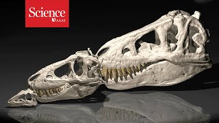 Hungry teen dinosaurs crowded out their competitors