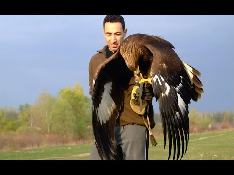 Hunting with a Golden Eagle - Amazing short movie
