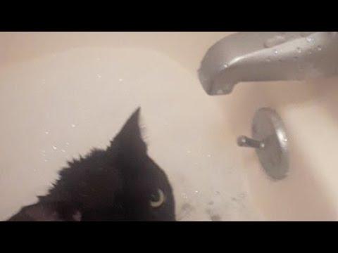 Cats Bath Time
