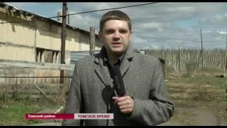 На сотрудников организации, занимающейся в Томске отловом бродячих собак, напал томич