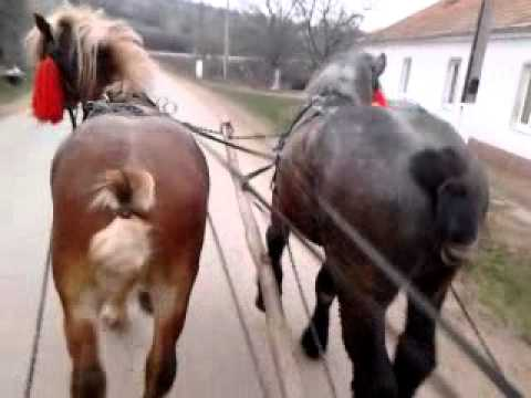 cai de vanzare jud Arad, pentru detalii sunati la nr de tel
