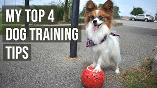My Top 4 Tips For Training Your Dog Tricks // Percy the Papillon Dog