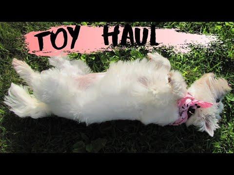 dog-toy-haul!-*zippy-paws*