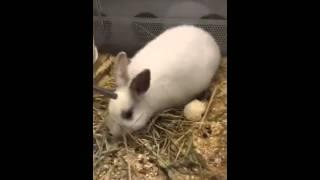 ElenaGutten   Зоомагазин кролик хомяк попугай(, 2016-03-21T12:31:49.000Z)