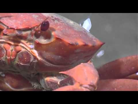 Gulf of Mexico 2012: Deep-sea Marine Life