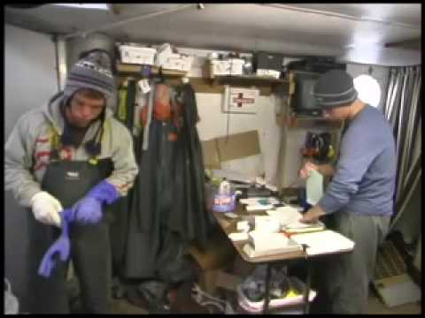 Salmon Tendering in Bristol Bay in the Bering Sea