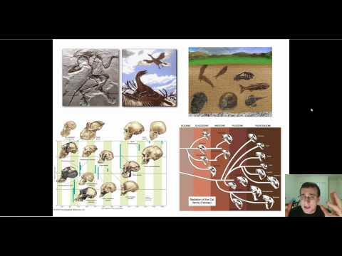 Evidence of Evolution (Part 1): Paleontology