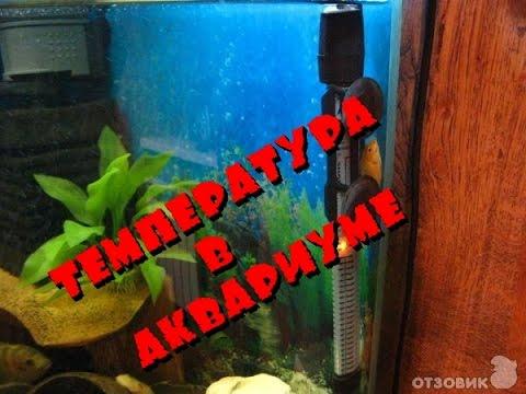 Температура в аквариуме. Домашний аквариум доступен для всех.