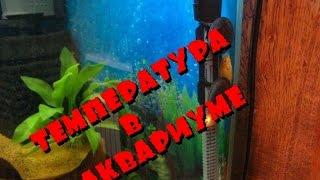видео Какая температура должна быть в аквариуме для рыбок?