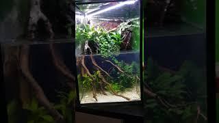 Asia biotop