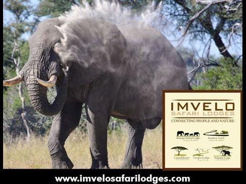 Webinar: Adventures in Zimbabwe with Imvelo Safari Lodges