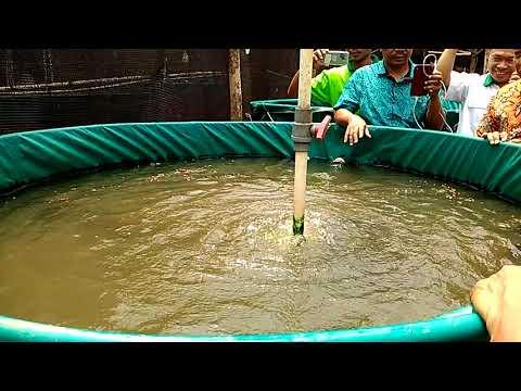 Budidaya ikan dengan teknologi Maxi River System (MRS)