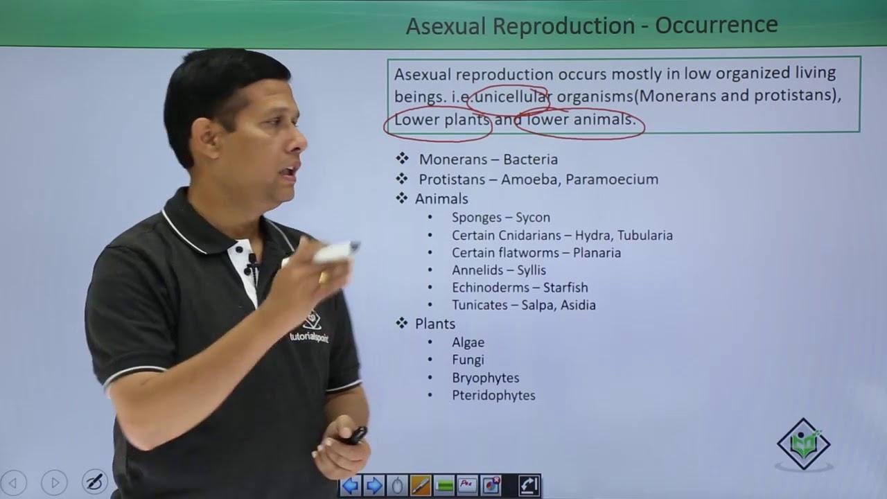 Amoeba asexual reproduction video starfish
