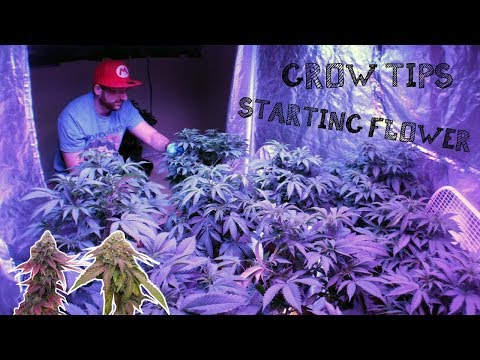 INDOOR GROW GUIDE:  GETTING READY FOR CANNABIS MARIJUANA FLOWERING STAGE להורדה