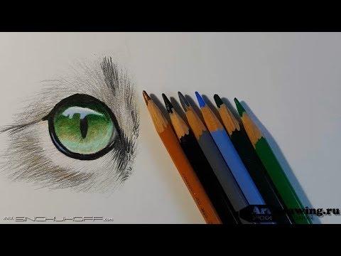 Как нарисовать глаз кошки поэтапно