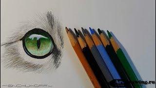Рисуем цветными карандашами глаз кошки