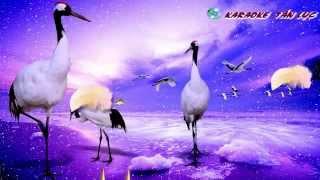 Những Đêm Lạnh Giá Organ Karaoke By Tấn Lực