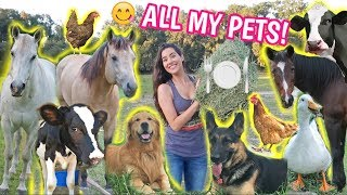 Feeding ALL My Pets In One Video