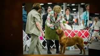 2012 Dogue De Bordeaux National Speciality